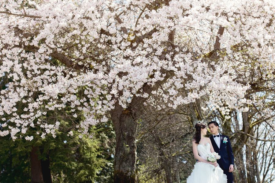 Gill_Mau_LEstelle_Photography_lestellevancouvercherryblossomsweddingengagement18_low